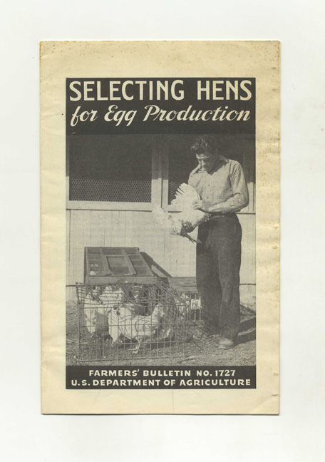 Selecting Hens For Egg Production